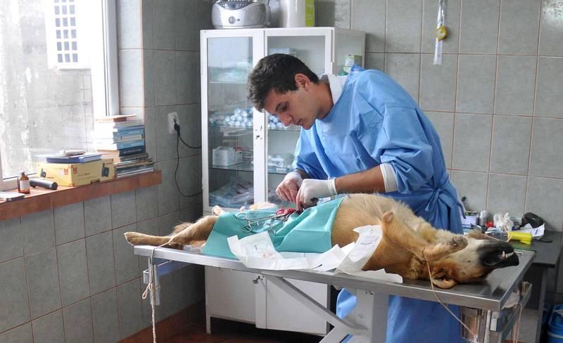 Peste o mie de câini sterilizati in Bacau, in acest an | Deșteptarea-  Ziarul Bacăului