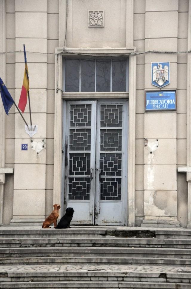 Sunt condamnate conditiile inumane de lucru din Judecatoria Bacau / foto: Ioan Bisca